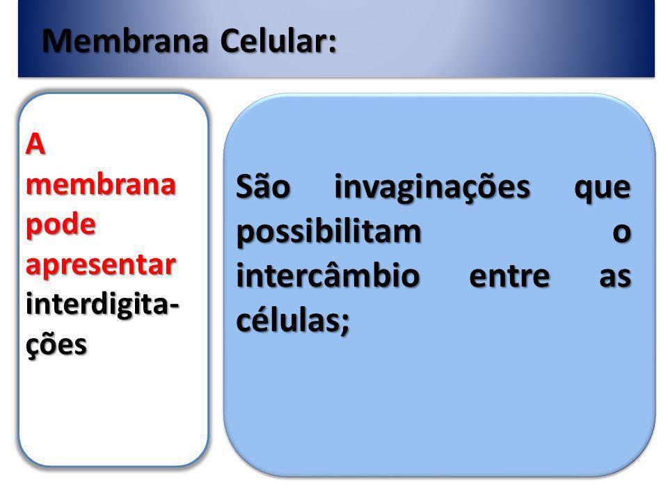 São invaginações que possibilitam o intercâmbio entre as células;