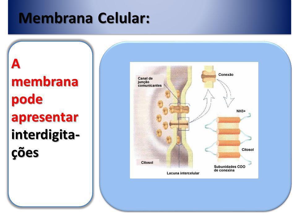 Membrana Celular: A membrana pode apresentar interdigita-ções