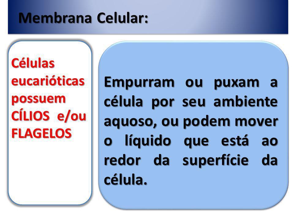Membrana Celular: Células eucarióticas possuem CÍLIOS e/ou FLAGELOS.
