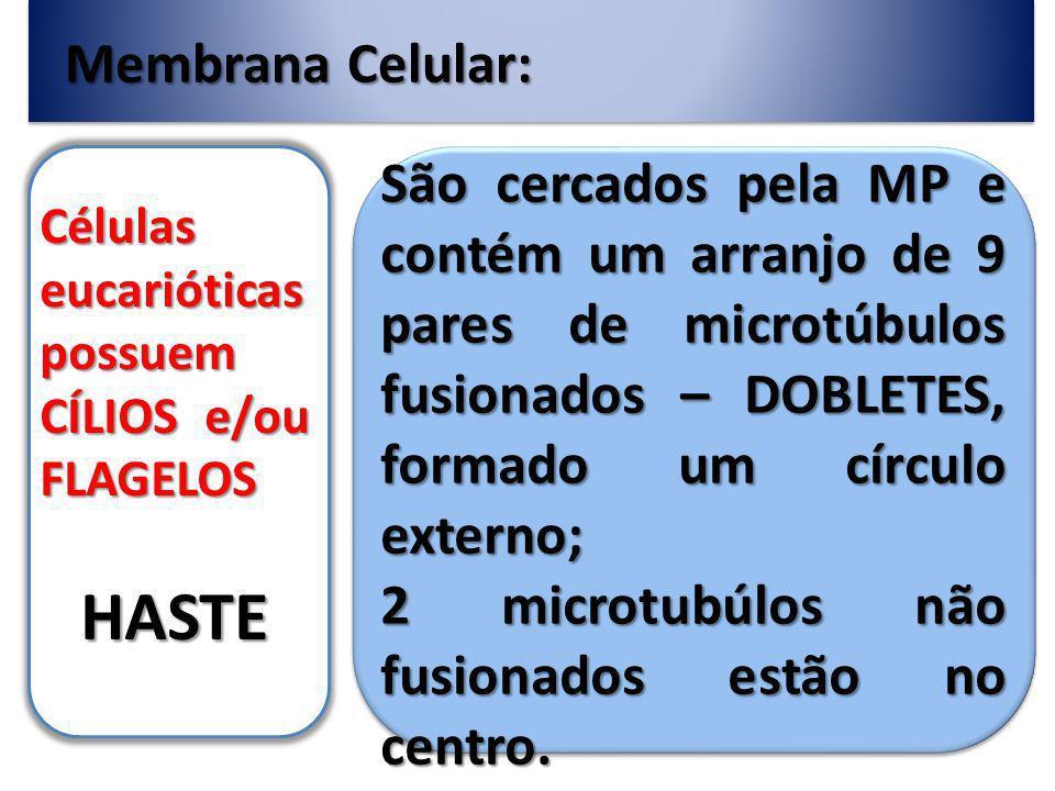HASTE Membrana Celular: