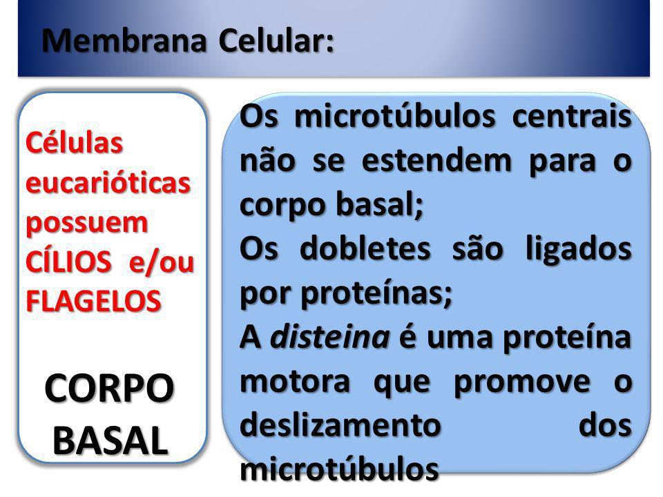 CORPO BASAL Membrana Celular: