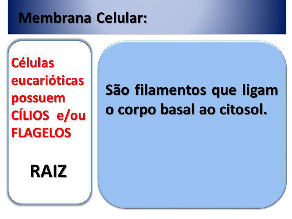RAIZ Membrana Celular: