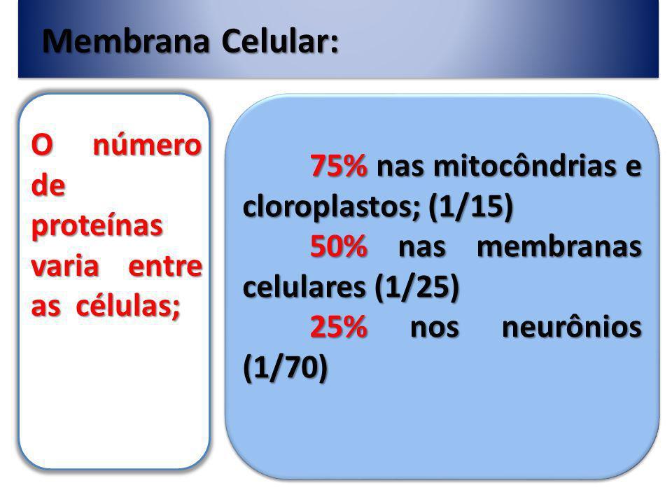 Membrana Celular: O número de proteínas varia entre as células;
