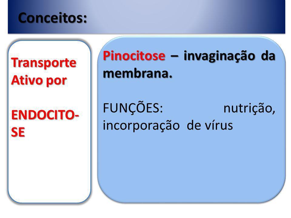 Conceitos: Pinocitose – invaginação da membrana. Transporte Ativo por