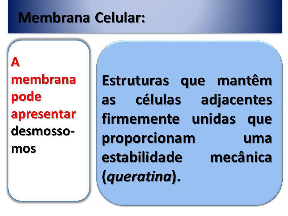 Membrana Celular: A membrana pode apresentar desmosso-mos.