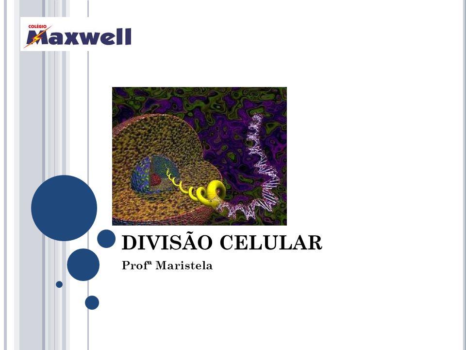 DIVISÃO CELULAR Profª Maristela