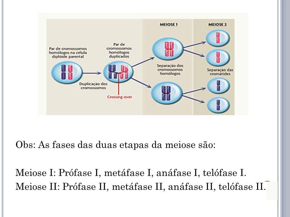 Obs: As fases das duas etapas da meiose são: