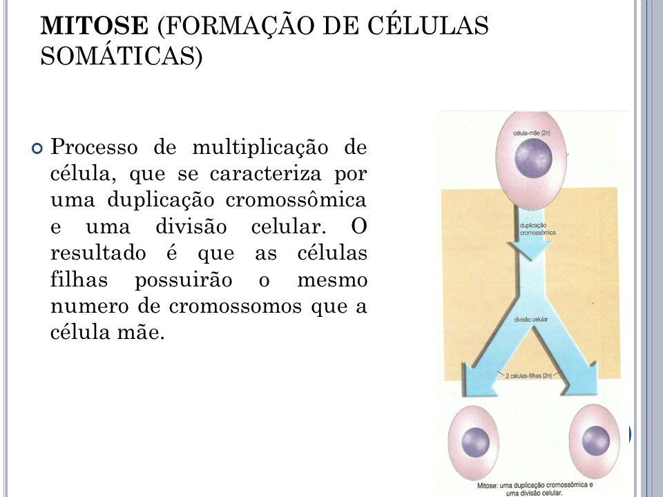 MITOSE (FORMAÇÃO DE CÉLULAS SOMÁTICAS)