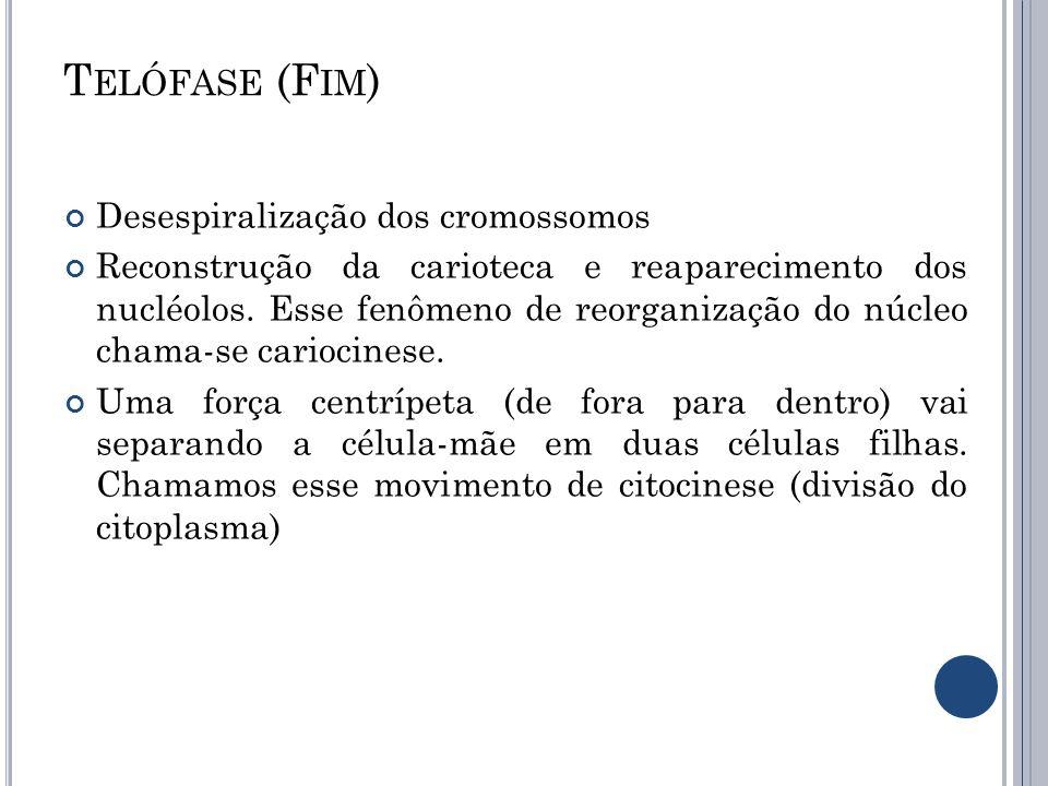 Telófase (Fim) Desespiralização dos cromossomos