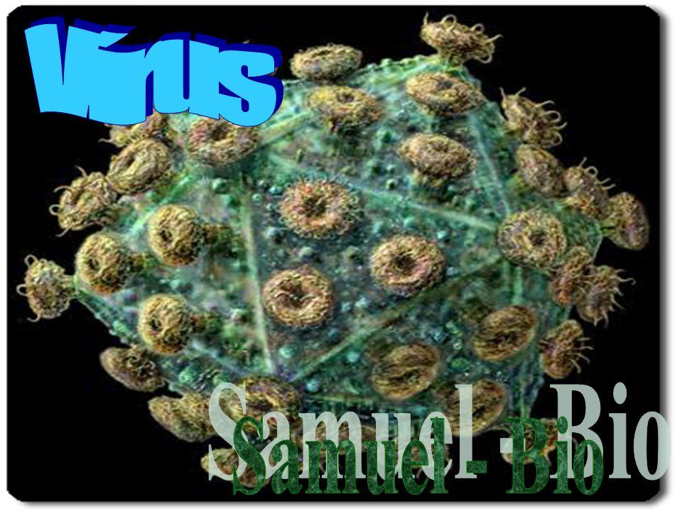 Vírus Samuel - Bio