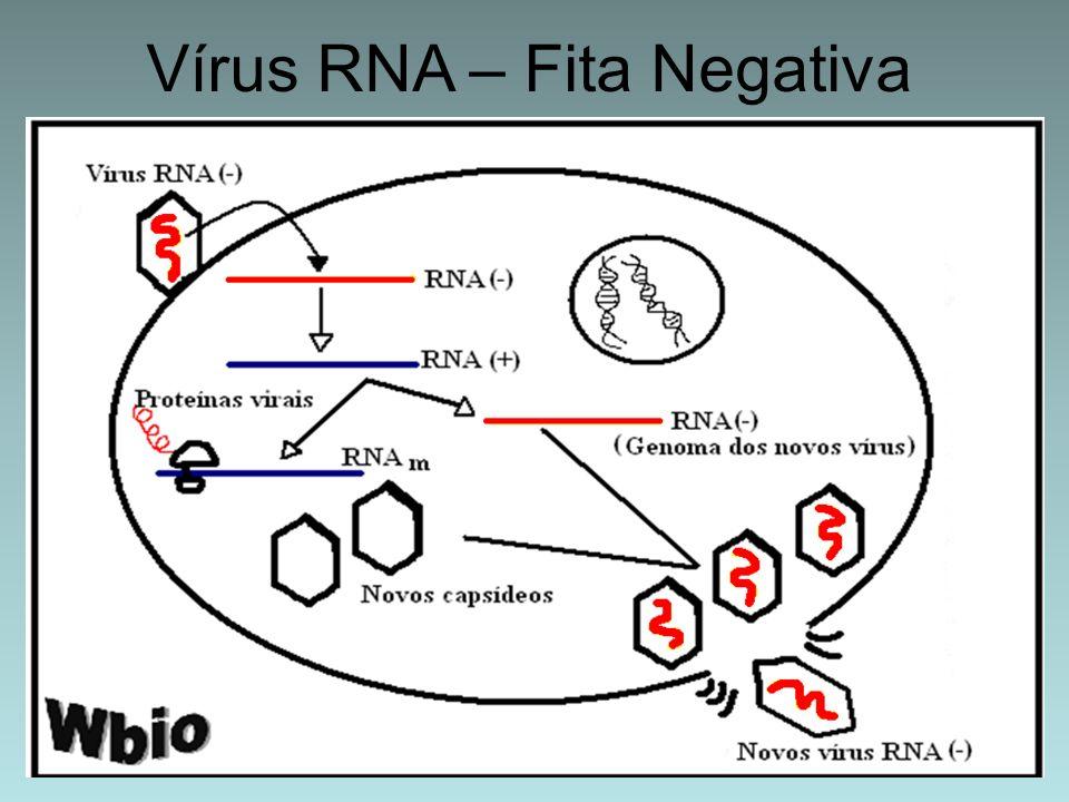 Vírus RNA – Fita Negativa