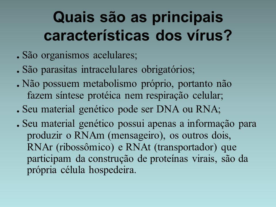 Quais são as principais características dos vírus