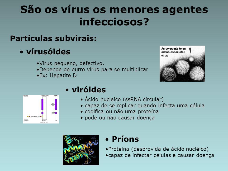 São os vírus os menores agentes infecciosos