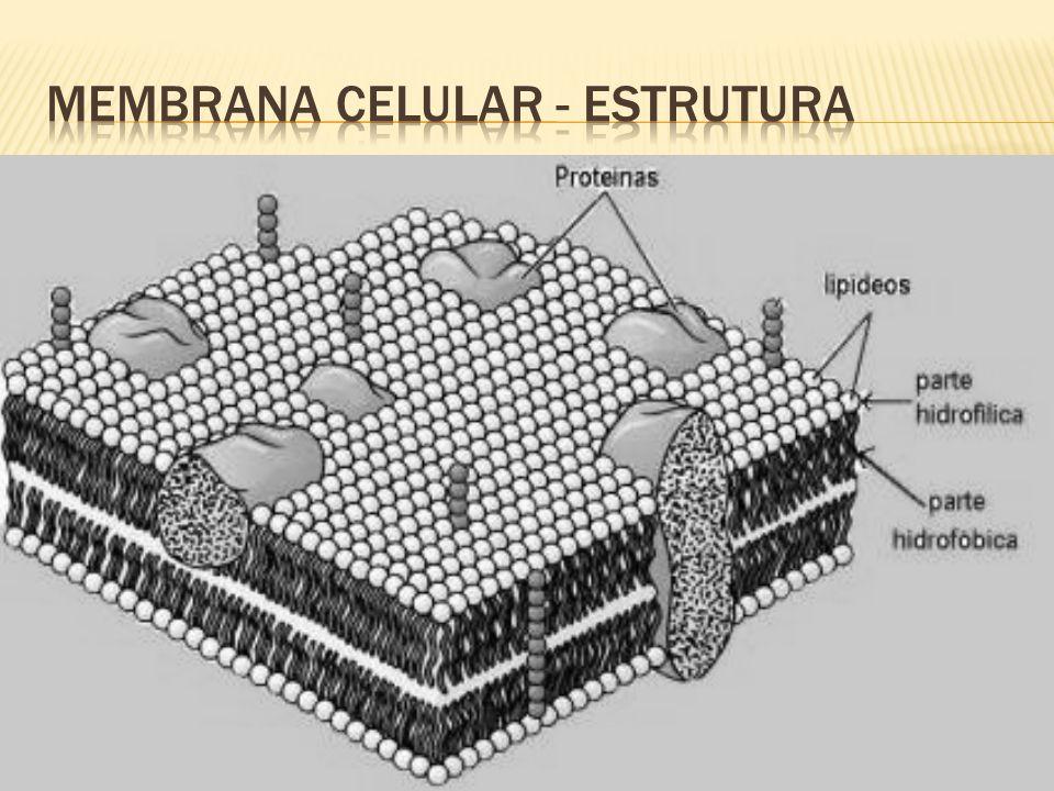 Membrana Celular - ESTRUTURA