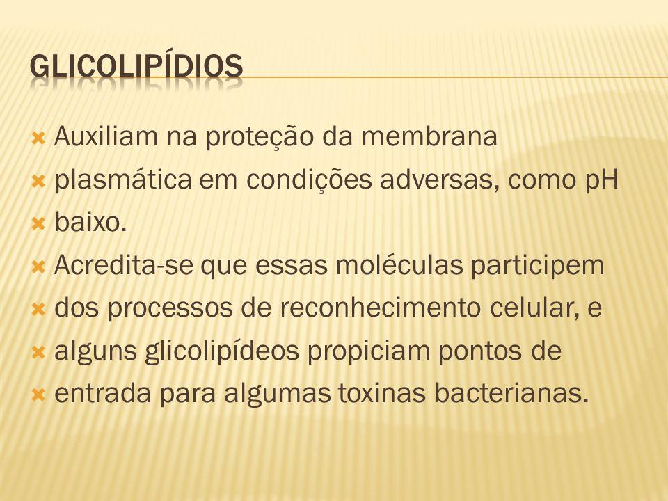 GLICOLIPÍDIOS Auxiliam na proteção da membrana