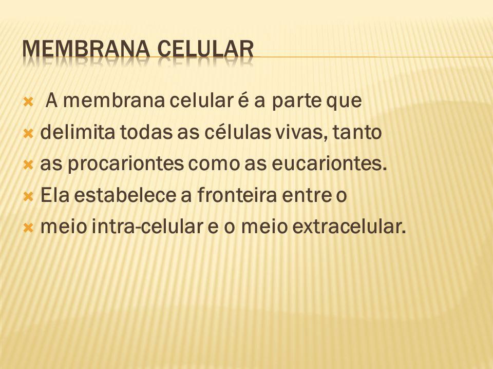 Membrana Celular A membrana celular é a parte que