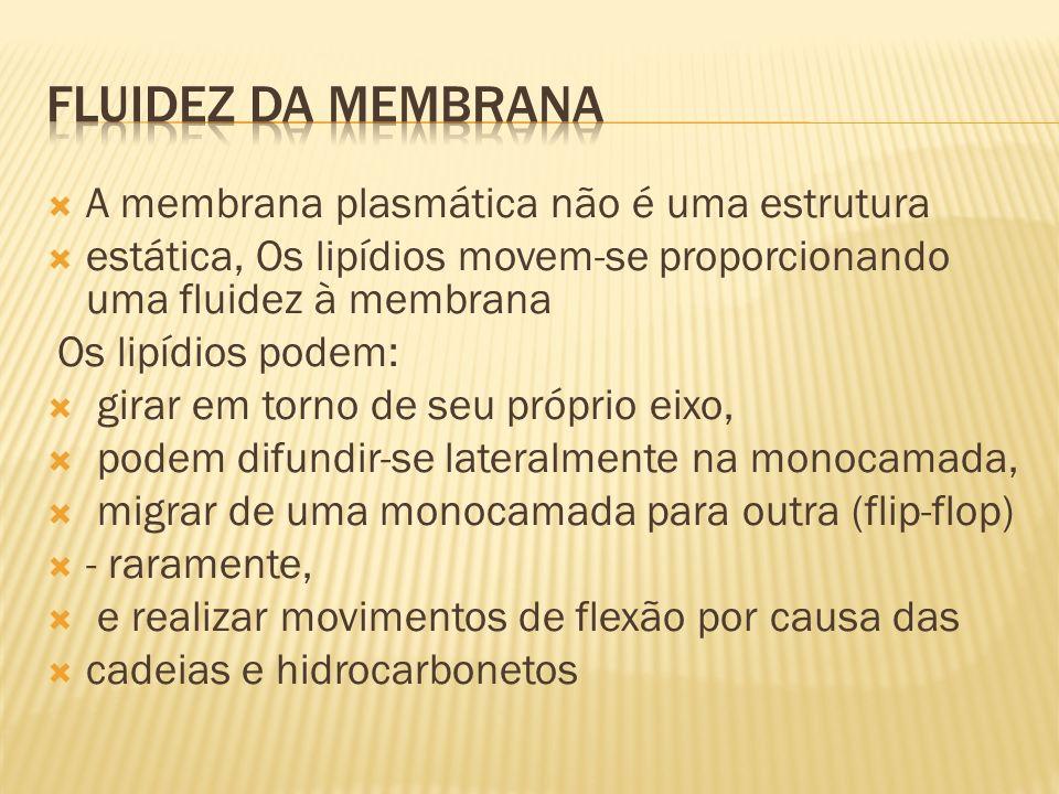 FLUIDEZ DA MEMBRANA A membrana plasmática não é uma estrutura