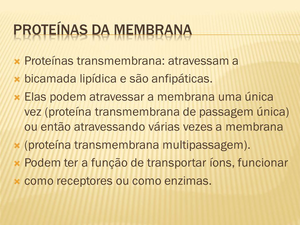 PROTEÍNAS DA MEMBRANA Proteínas transmembrana: atravessam a