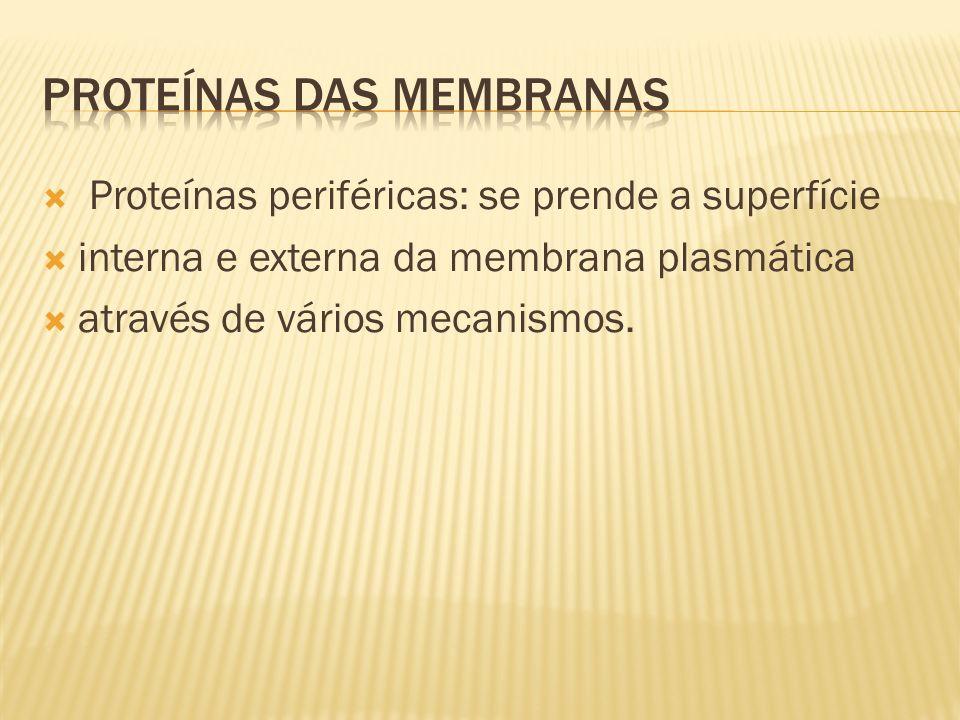 PROTEÍNAS DAS MEMBRANAS