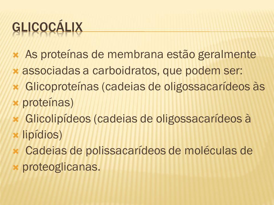 GLICOCÁLIX As proteínas de membrana estão geralmente