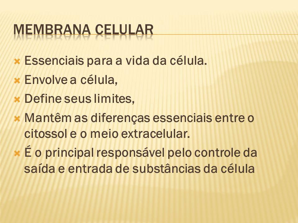 Membrana Celular Essenciais para a vida da célula. Envolve a célula,