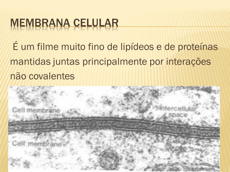 Membrana Celular É um filme muito fino de lipídeos e de proteínas mantidas juntas principalmente por interações não covalentes