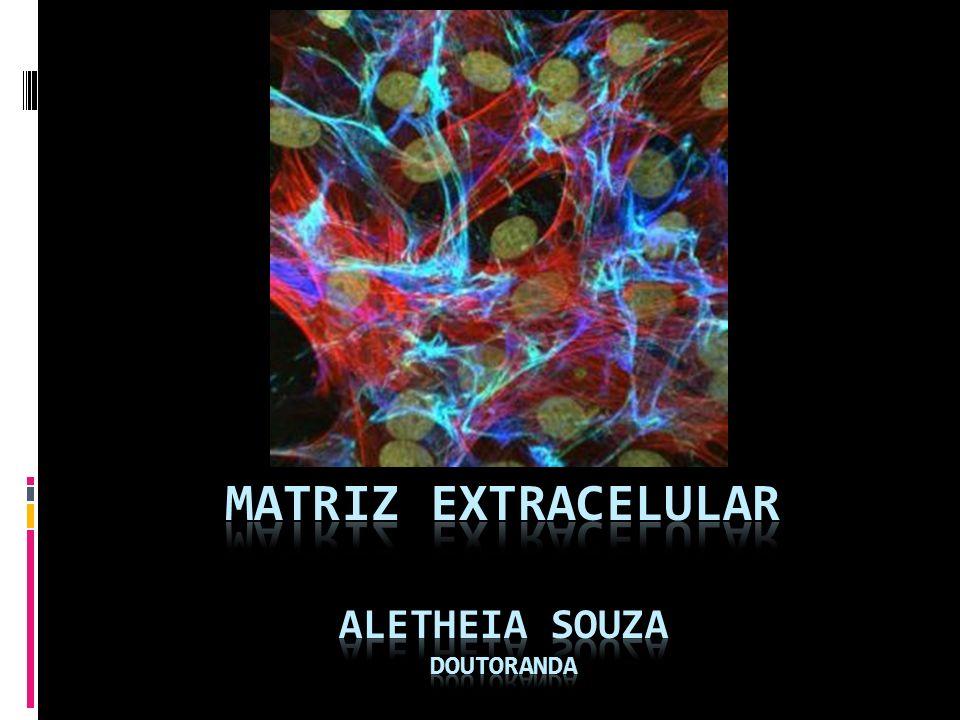 Matriz extracelular aletheia Souza doutoranda