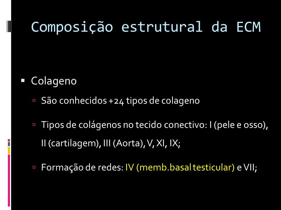 Composição estrutural da ECM
