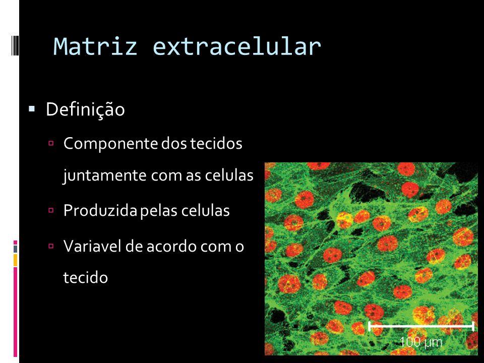 Matriz extracelular Definição