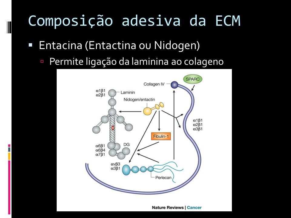 Composição adesiva da ECM