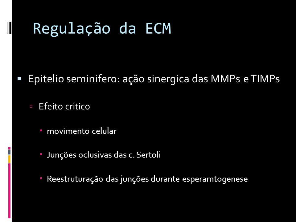 Regulação da ECM Epitelio seminifero: ação sinergica das MMPs e TIMPs