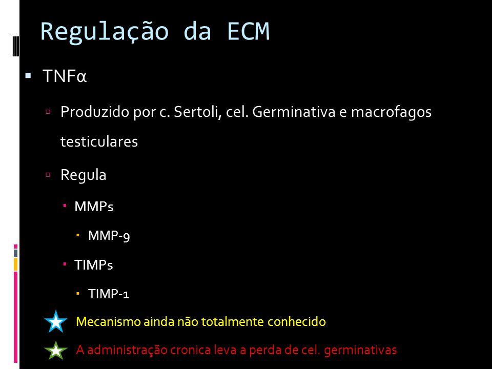 Regulação da ECM TNFα. Produzido por c. Sertoli, cel. Germinativa e macrofagos testiculares. Regula.