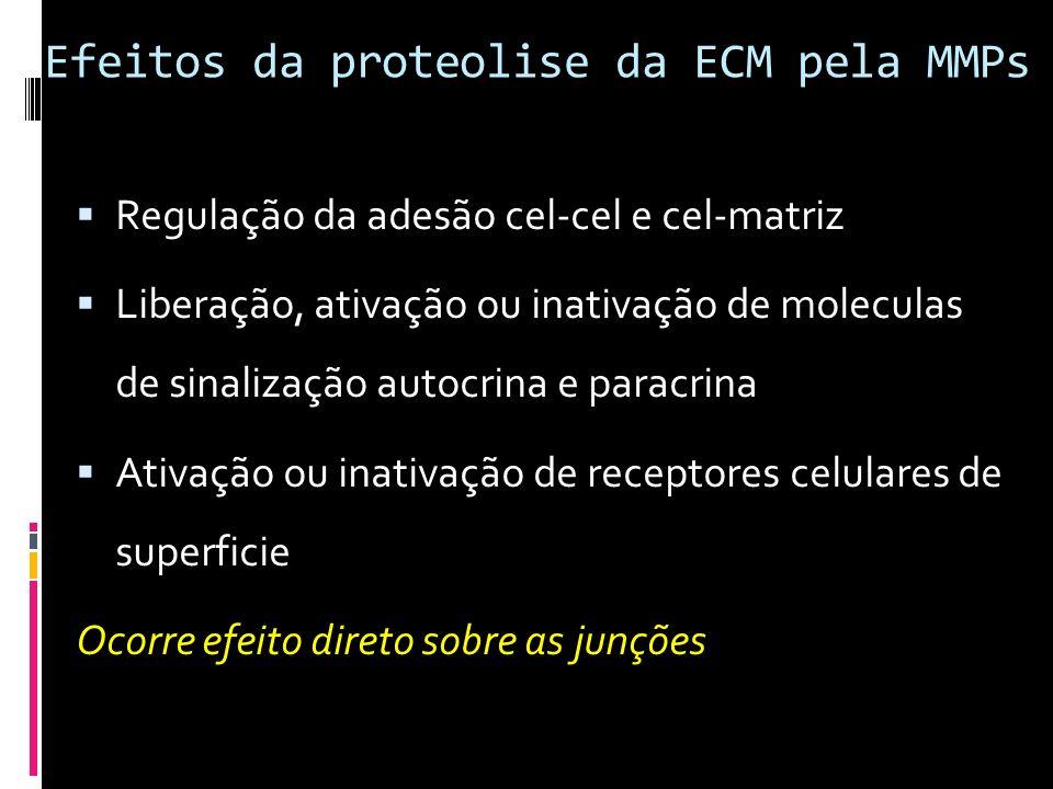 Efeitos da proteolise da ECM pela MMPs