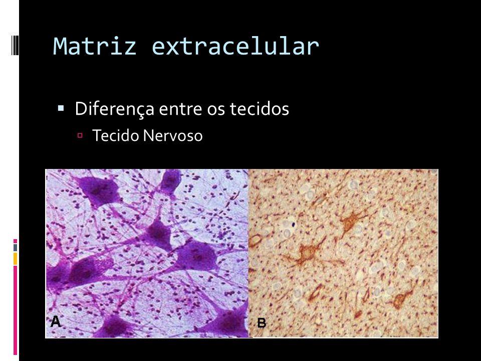 Matriz extracelular Diferença entre os tecidos Tecido Nervoso