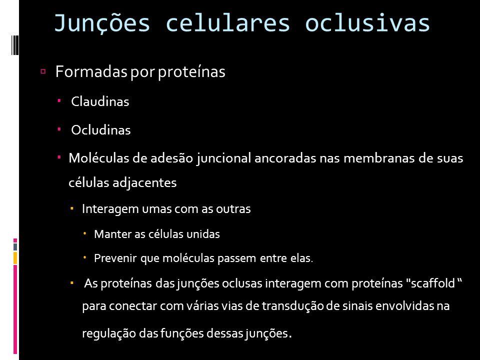 Junções celulares oclusivas