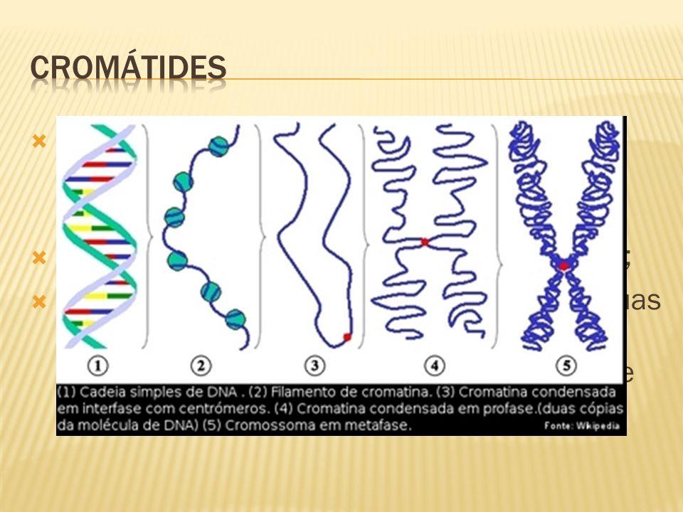 cromátides Os filamentos filhos espiralados e condensados que constituem cada cromossomo são idênticos;