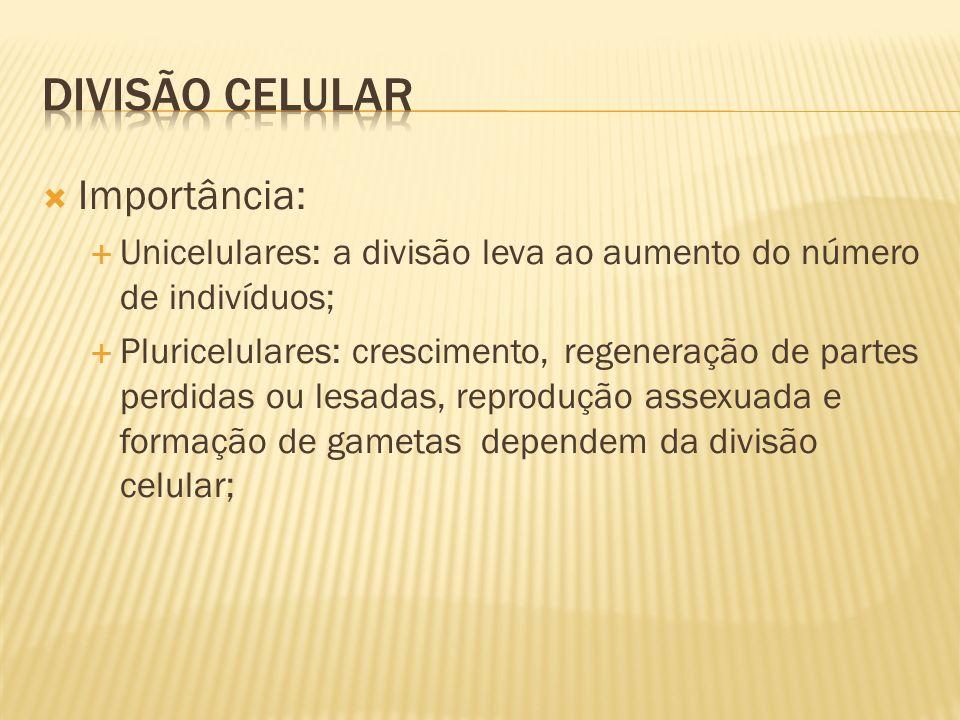 Divisão celular Importância: