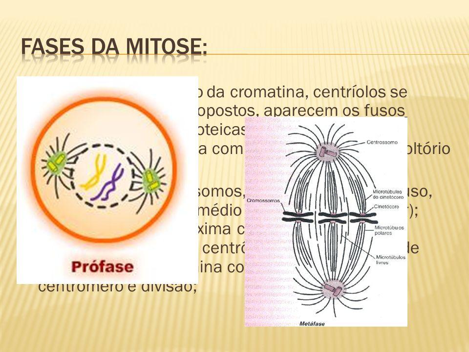 Fases da mitose: