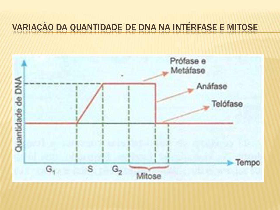 Variação da quantidade de dna na intérfase e mitose
