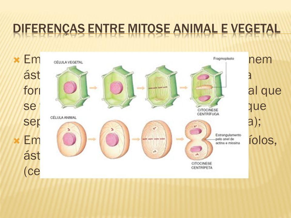 Diferenças entre mitose animal e vegetal
