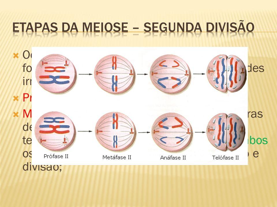 Etapas da meiose – segunda divisão
