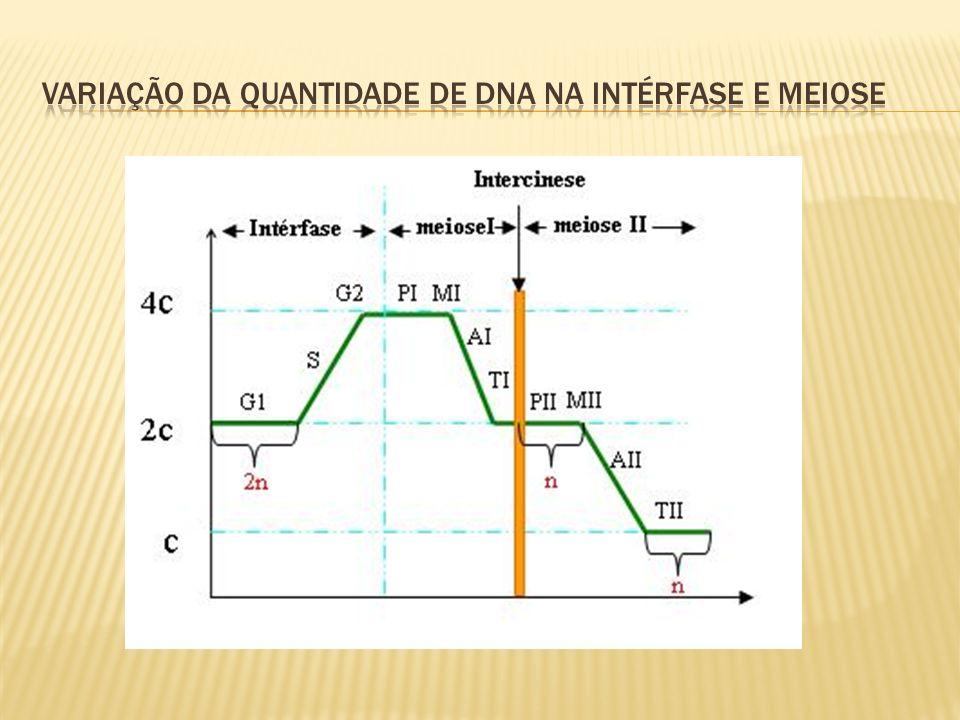 Variação da quantidade de dna na intérfase e meiose