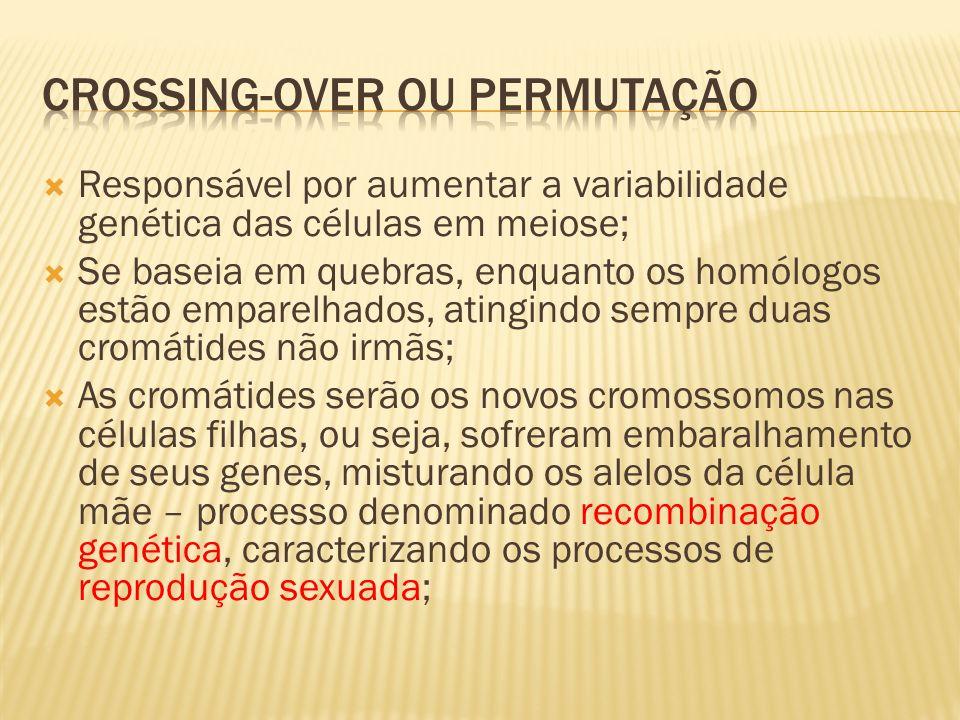 Crossing-over ou permutação