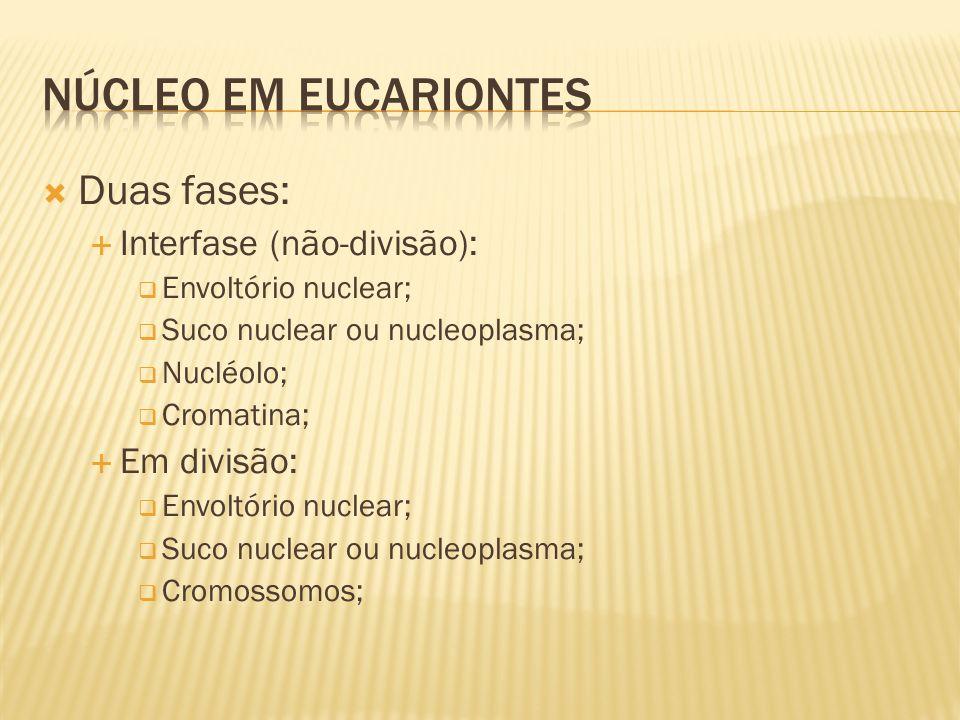 Núcleo em eucariontes Duas fases: Interfase (não-divisão): Em divisão: