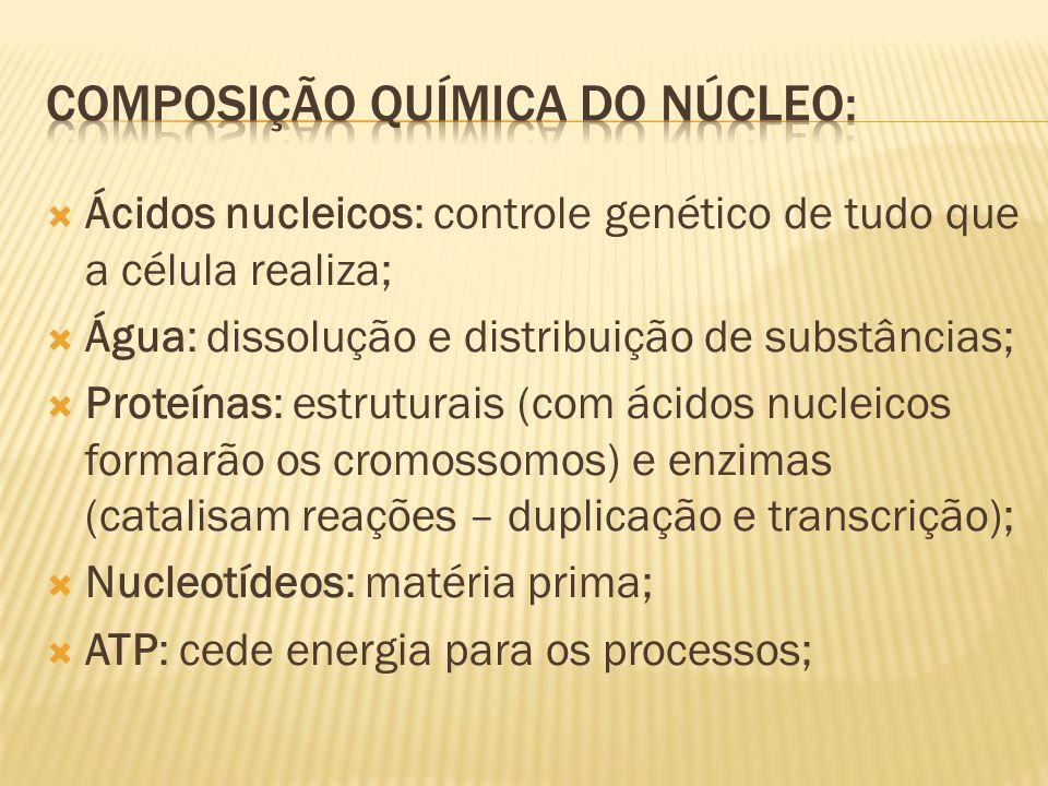 Composição química do núcleo: