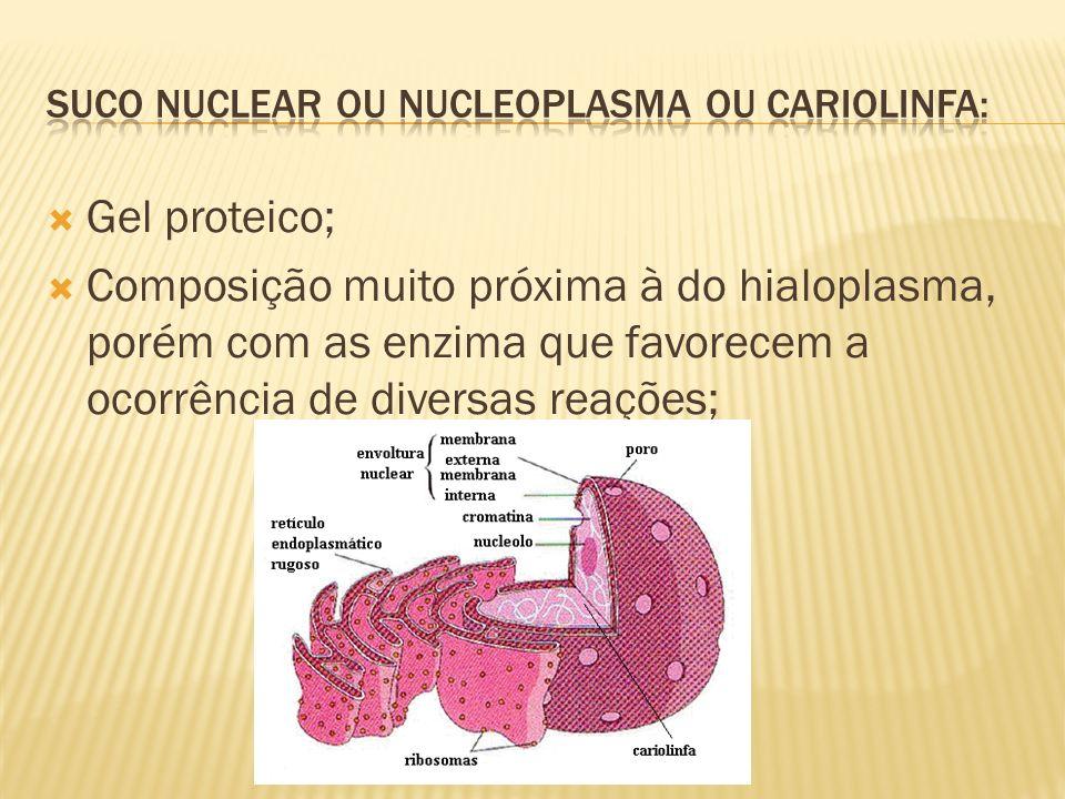 Suco nuclear ou nucleoplasma ou cariolinfa: