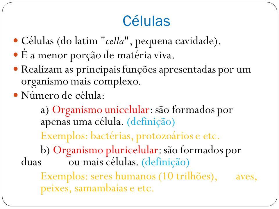 Células Células (do latim cella , pequena cavidade).