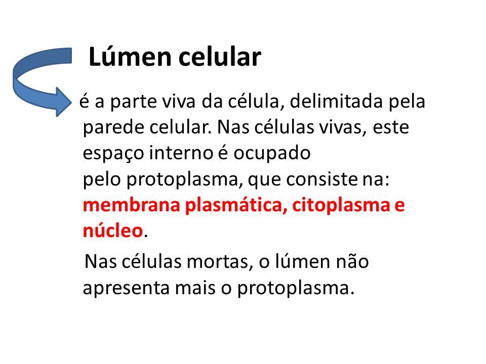 Lúmen celular