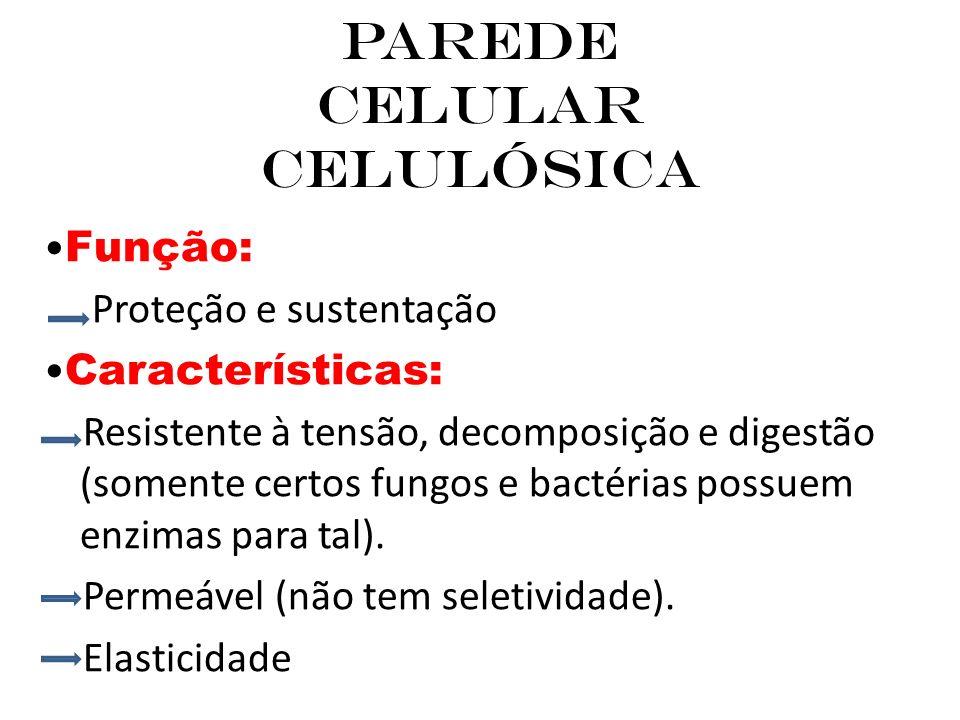 Parede Celular Celulósica