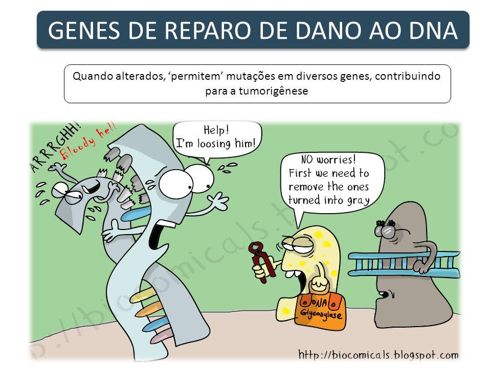 GENES DE REPARO DE DANO AO DNA